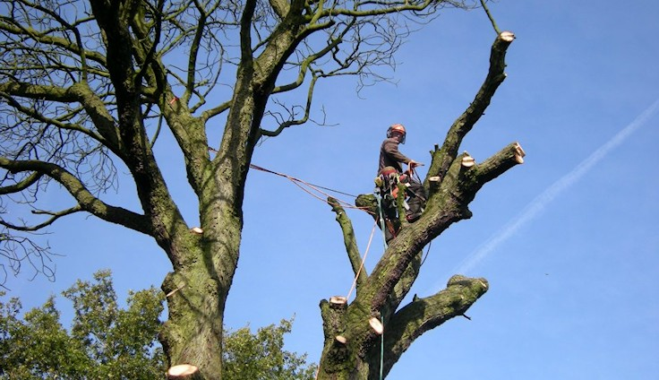 Tree Surgery Wigan
